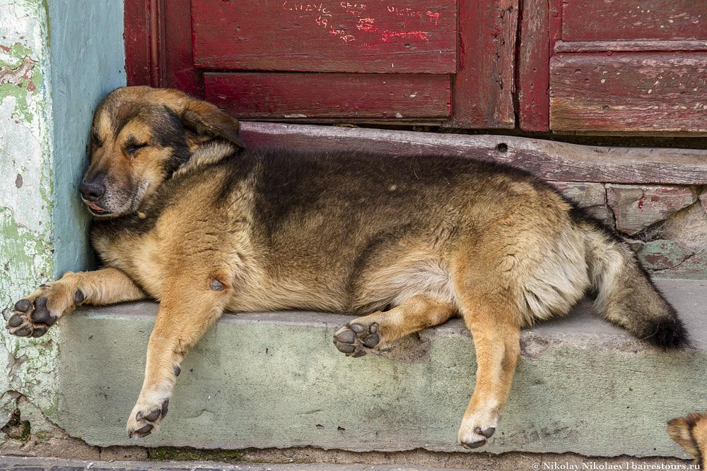 29. Собаки передают общий дух и настрой аргентинского народа.