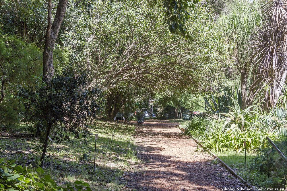 9. Это уже  обычная дорожка в саду ближе к задворкам.