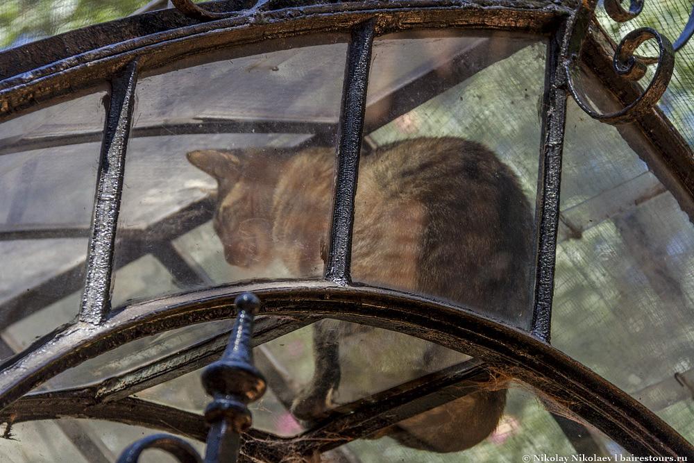 13. Также в саду водятся классные коты, которые залезают в самые немыслимые места.