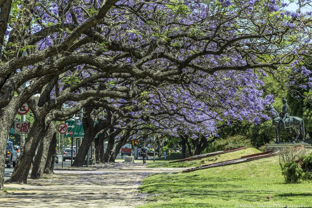 2. Палермо – один из самых зеленых районов Буэнос-Айреса. Тут расположена крупнейшая парковая зона относительного центра Буэнос-Айреса, да и сами улицы достаточно зеленые из-за плотного насаждения деревьев.