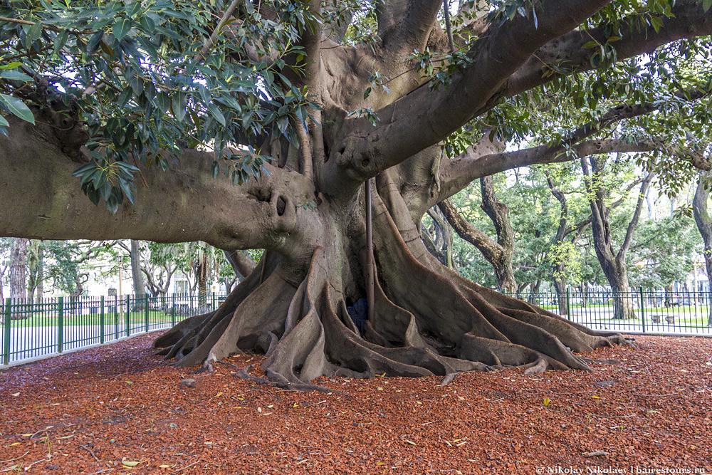 23. Деревья тоже могут считаться по праву одними из главных достопримечательностей.