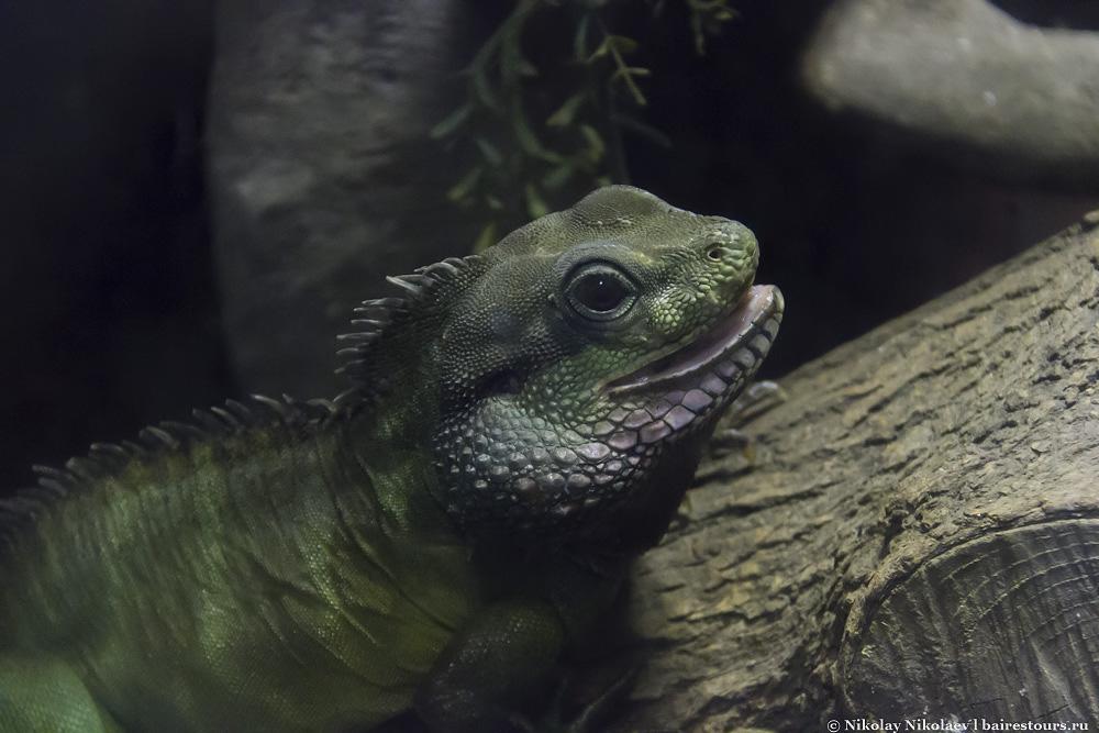 11. Не знаю, как называется этот зверек, но это самая няшная рептилия во всем зоопарке.