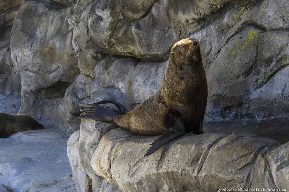 13. Имеется немного морских обитателей.