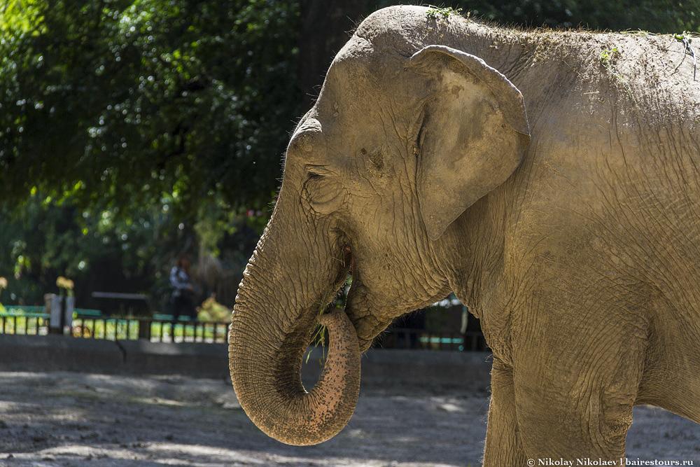 21. Собственно и обитатели рядом с этими зданиями тоже уходят корнями в восток. Вот, например, индийский слон.