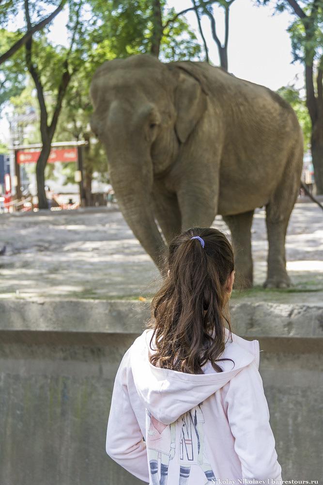 23. Между даже таким большим зверем, как слон, нет видимых преград. Внизу находится большой ров.