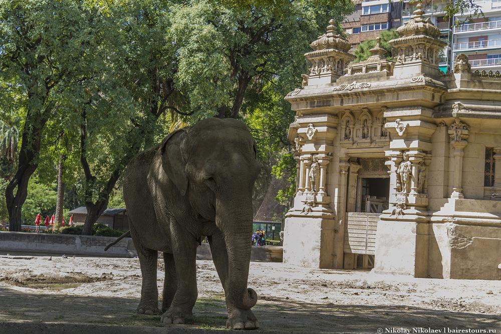 24. С определенного ракурса может показаться, что слон ходит прямо посреди города. У некоторых домов просто шикарный вид на весь зоопарк.