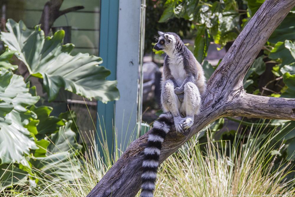 36. Кусочек Мадагаскара.