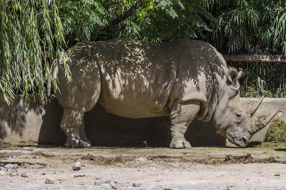43. Носороги тоже не в восторге.