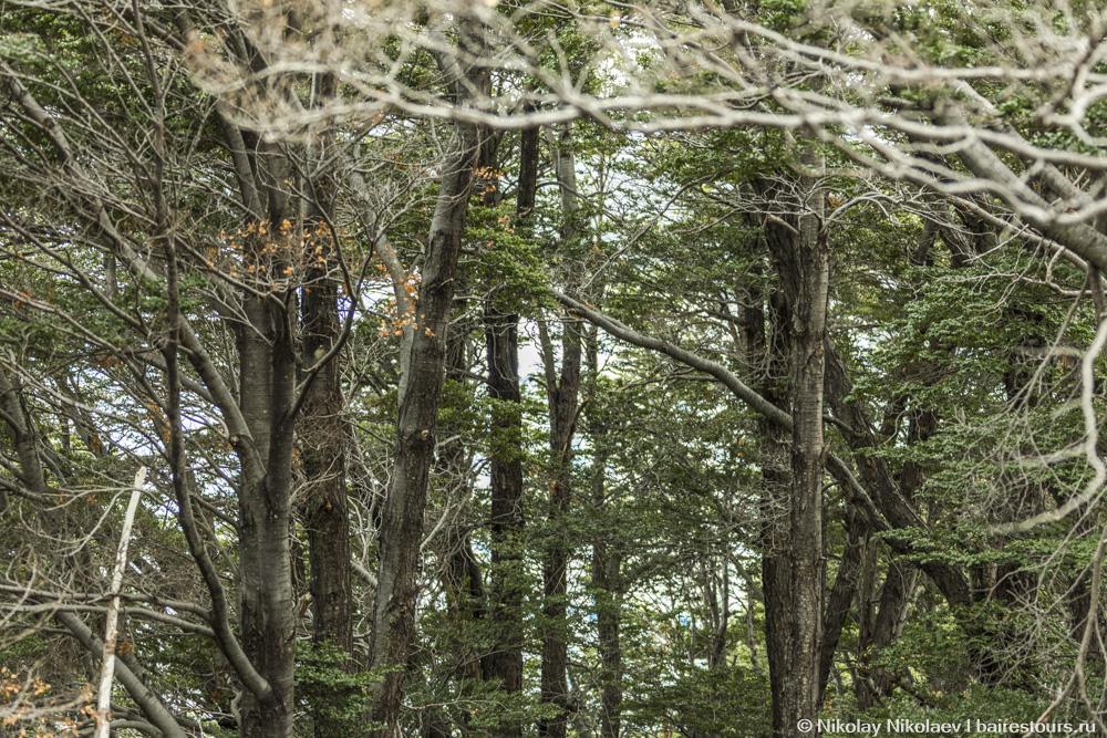 11. Бродя по ним, можно любоваться не только ледником, но и лесом.