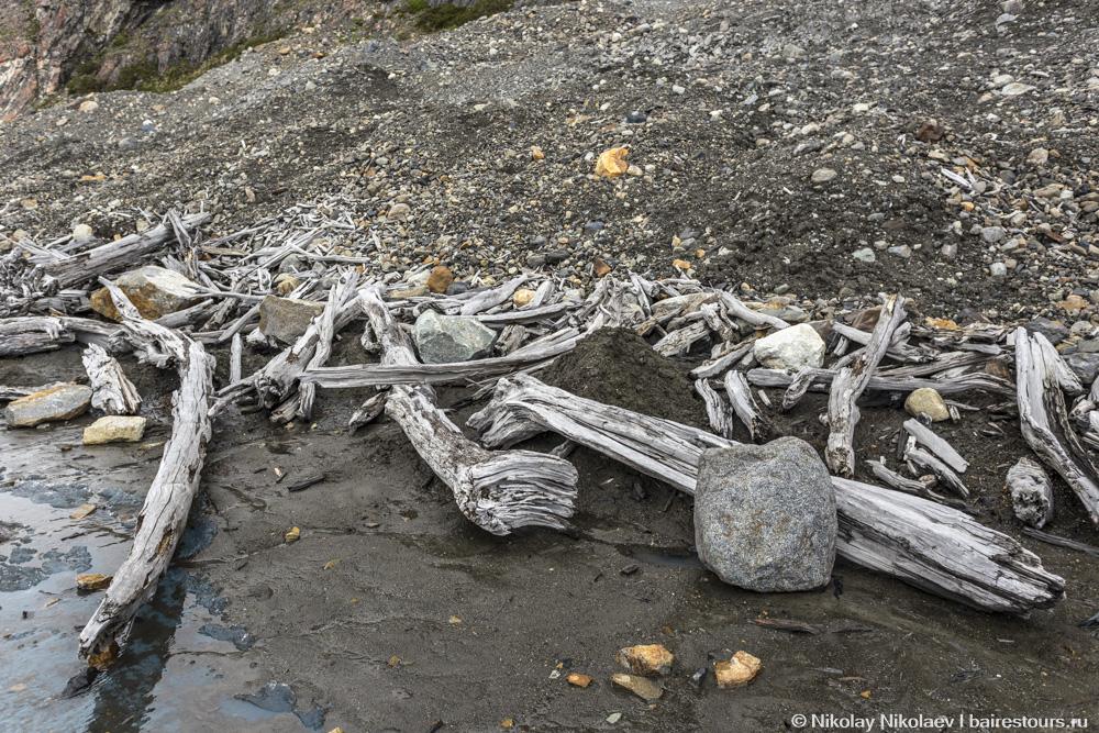 36. Это то, что остается от громадных деревьев, когда ледник отступает.