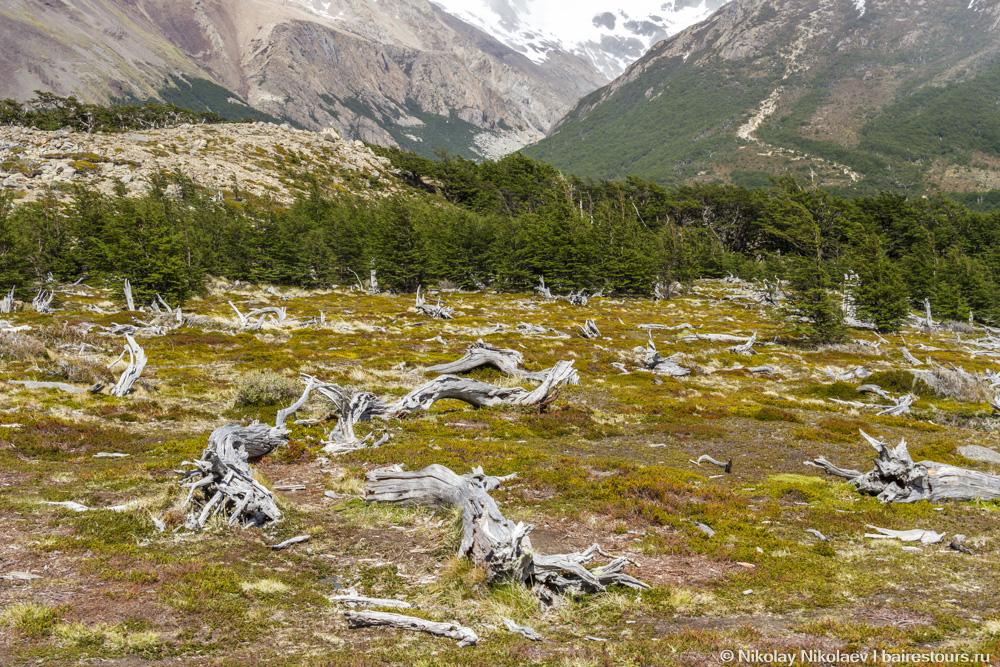09. Как много и мертвого леса, в чем тоже принимают участие сотни тысяч тонн льда.