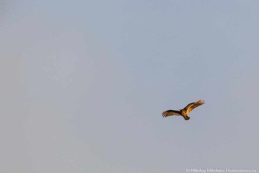 28. Даже орел позолотел :)