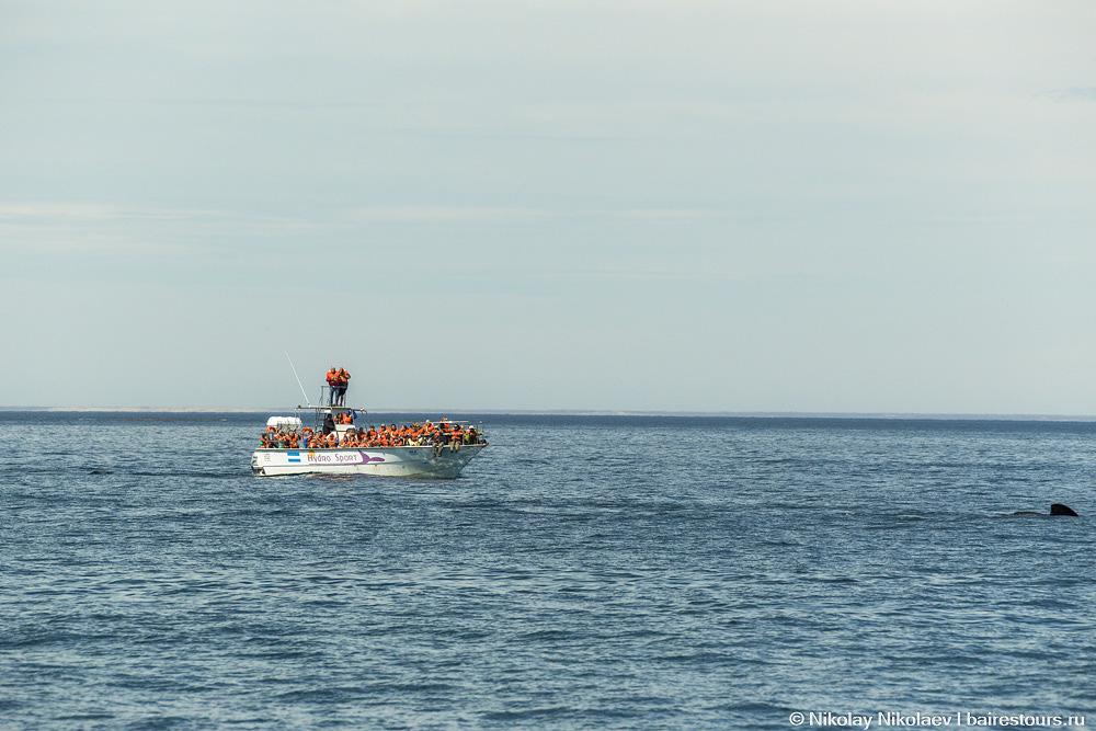 39. Далеко в океан идти не надо, уже через пять минут оказываешься в месте, где китов довольно много.