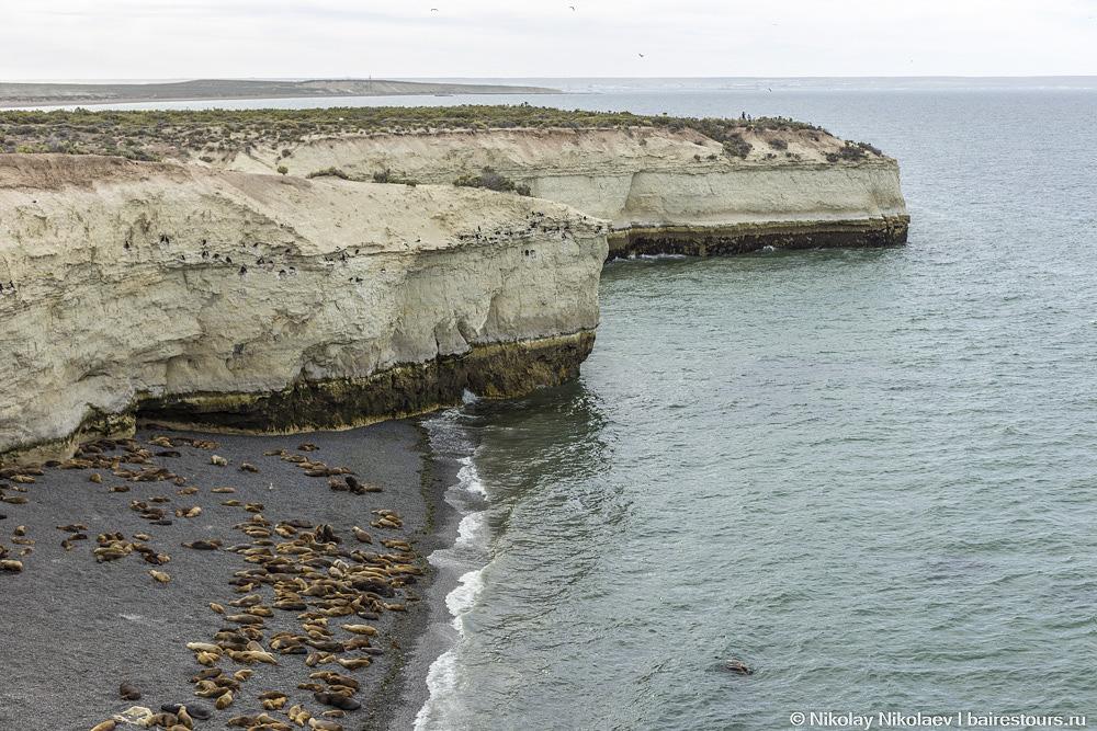 53. На пляжах нет туристов, зато лежбища морских котиков в изобилии.