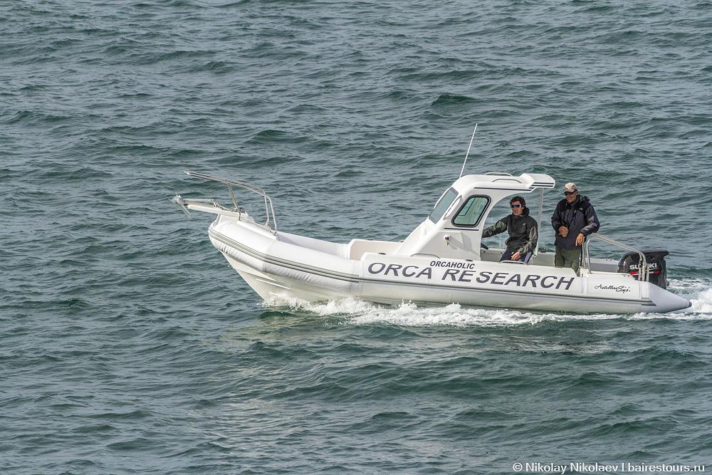 61. Время от времени можно заметить лодки, предназначенные для изучение касаток, в Аргентине этих китов-убийц называют «орками» :) Именно на Вальдесе разворачивается одно из самых драматичных зрелищ в природе, которые может наблюдать человек: касатки охотятся на тюленей прямо на берегу, выпрыгивая из океана. Тем не менее, стать свидетелем такого зрелища не так-то просто, поскольку касаток здесь не так много, как китов, да и охотятся они в избранных местах.