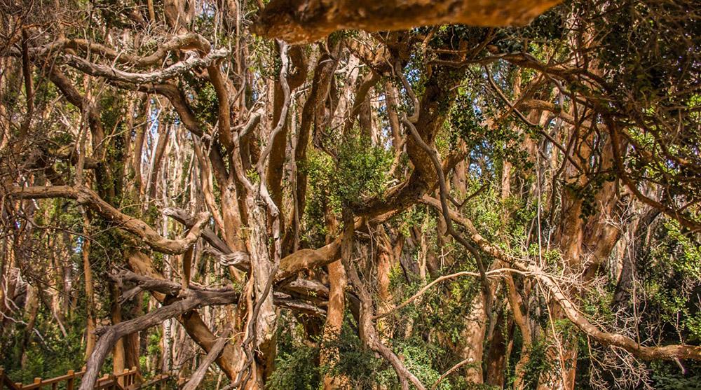 Парки и леса Барилоче, Аргентина