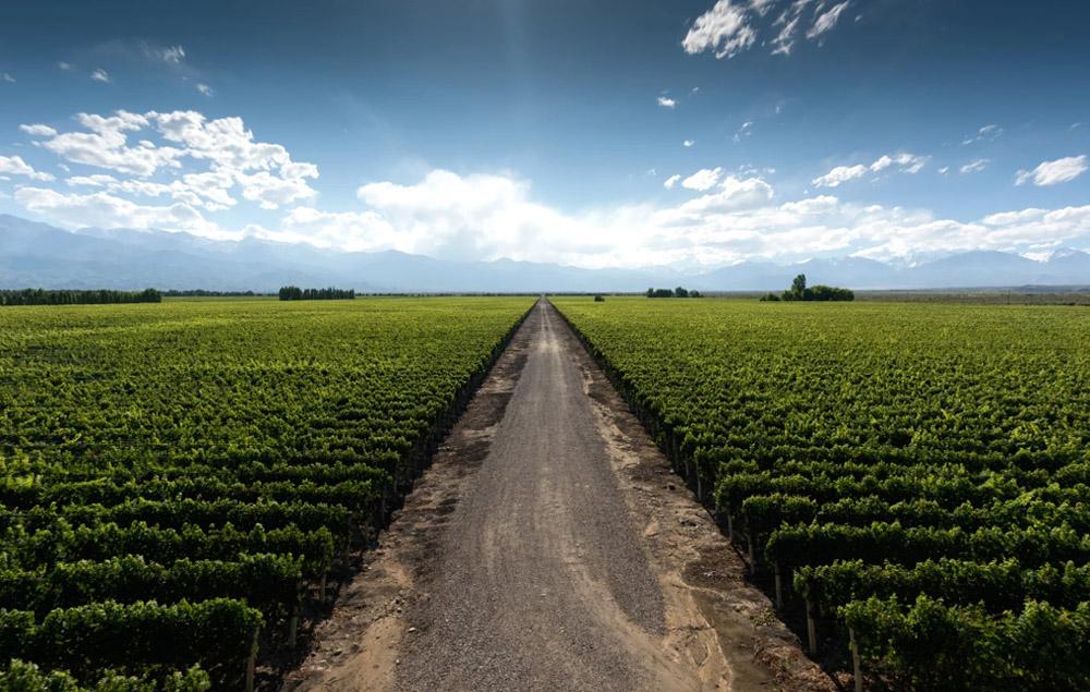 Мендоса — город солнца и вина в Аргентине