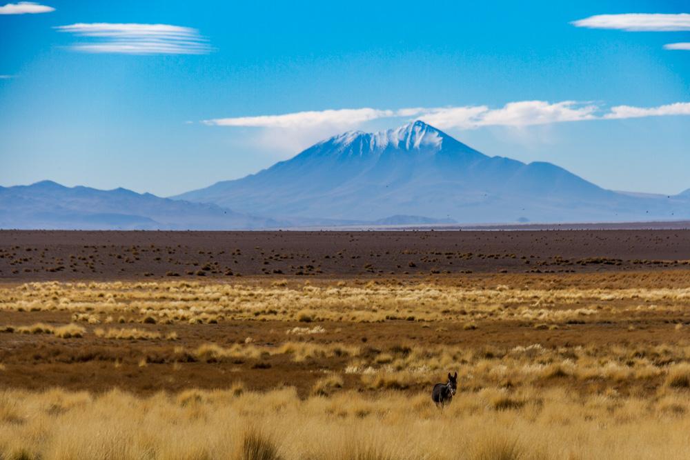 Экспедиция по аргентинской Пуне. Осел и вулкан.
