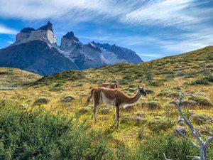 Контрасты Чили: от Атакмы до Патагонии