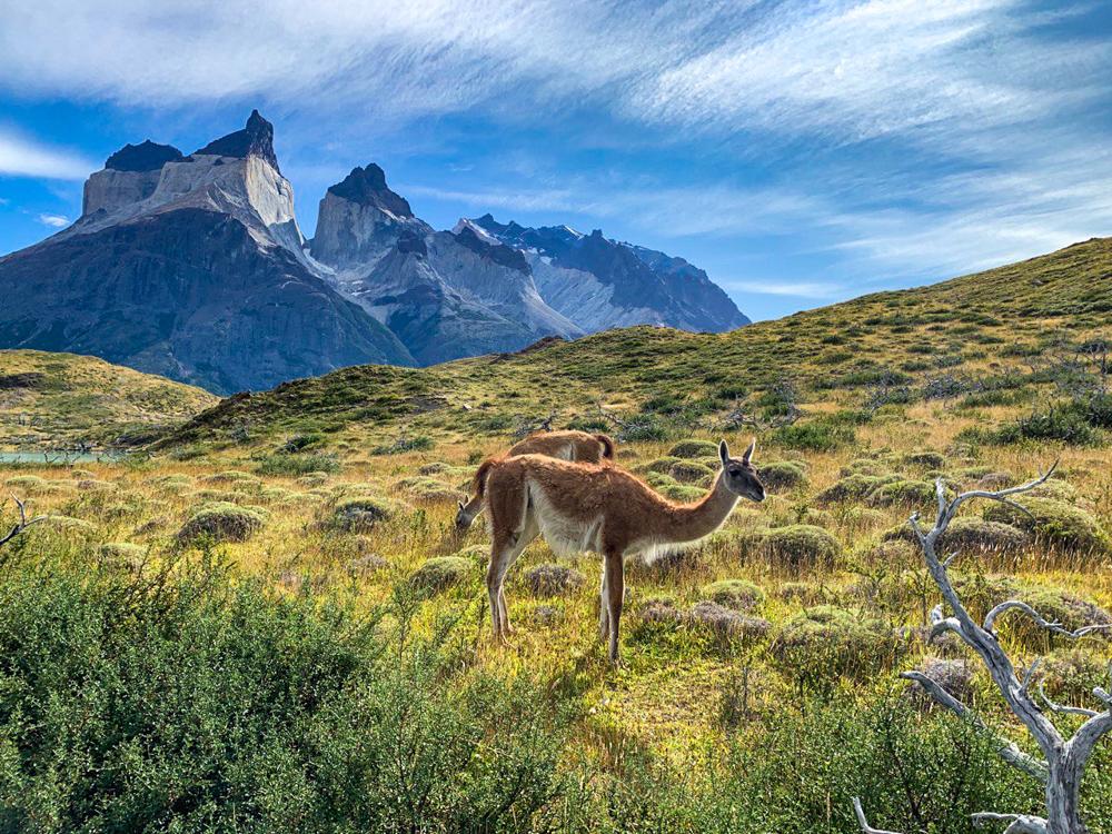 Треккинг в Патагонии